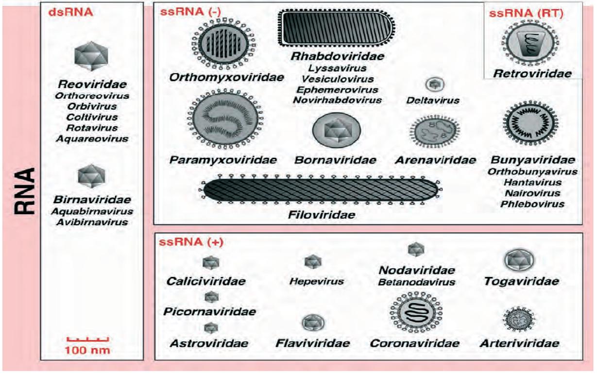 DNA virus vs... Reverse Complement