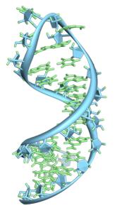 325px-Pre-mRNA-1ysv.png-tubes
