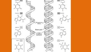 Dna virus vs rna virus sanjays blog dna vs rna malvernweather Choice Image