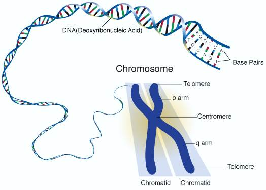 differences and similarities between gene and allele sanjay s blog
