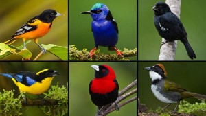 ss_birds_diversity