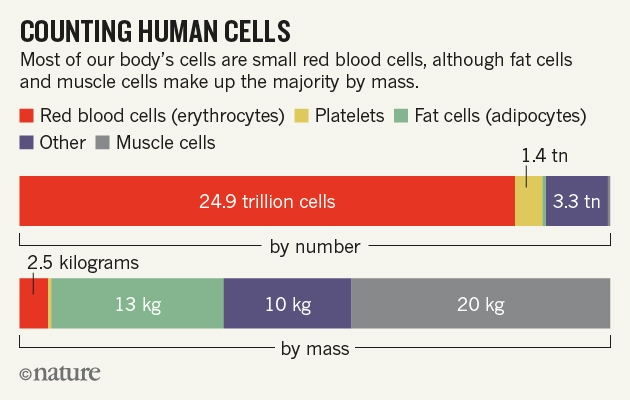 nature-human-cells-8.01.16-v2